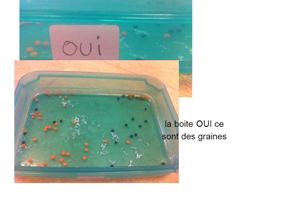 la boite OUI ce sont des graines
