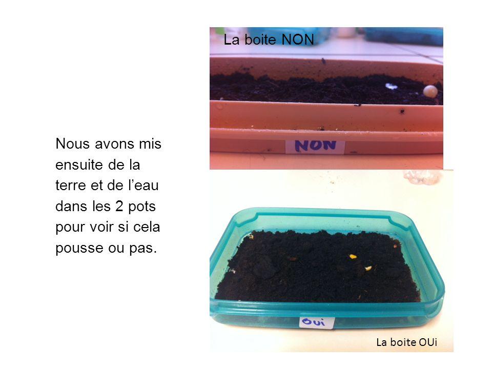 La boite NON Nous avons mis ensuite de la terre et de l'eau dans les 2 pots pour voir si cela pousse ou pas.