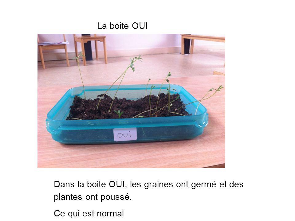 La boite OUI. Dans la boite OUI, les graines ont germé et des plantes ont poussé.