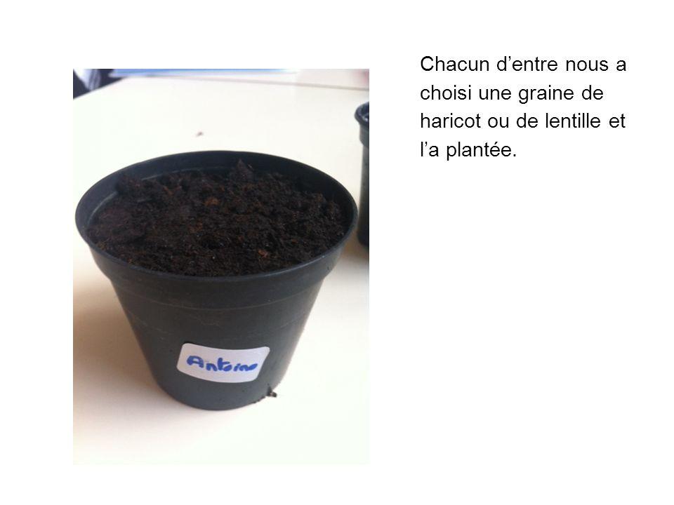 Chacun d'entre nous a choisi une graine de haricot ou de lentille et l'a plantée.