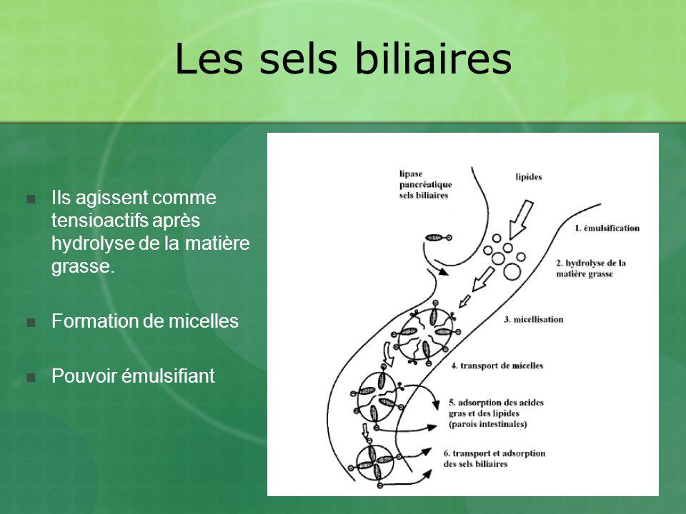 Les sels biliaires Ils agissent comme tensioactifs après hydrolyse de la matière grasse. Formation de micelles.