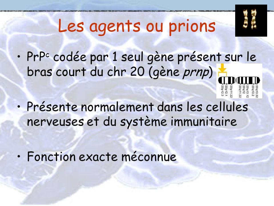 Les agents ou prions PrPc codée par 1 seul gène présent sur le bras court du chr 20 (gène prnp)