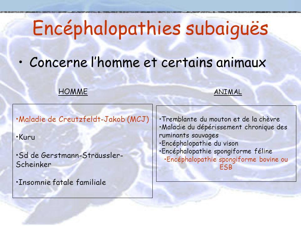 Encéphalopathies subaiguës