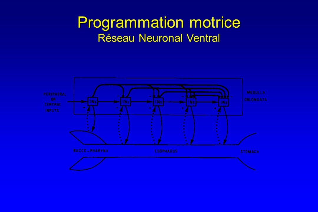Programmation motrice