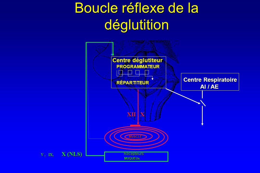 Boucle réflexe de la déglutition