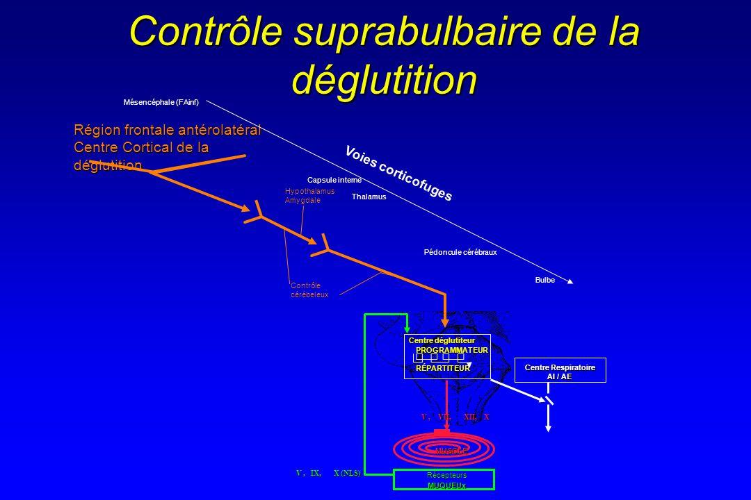 Contrôle suprabulbaire de la déglutition