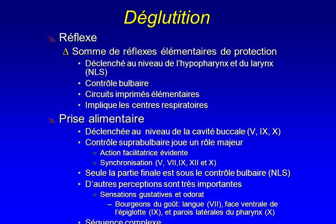 Déglutition Réflexe Prise alimentaire