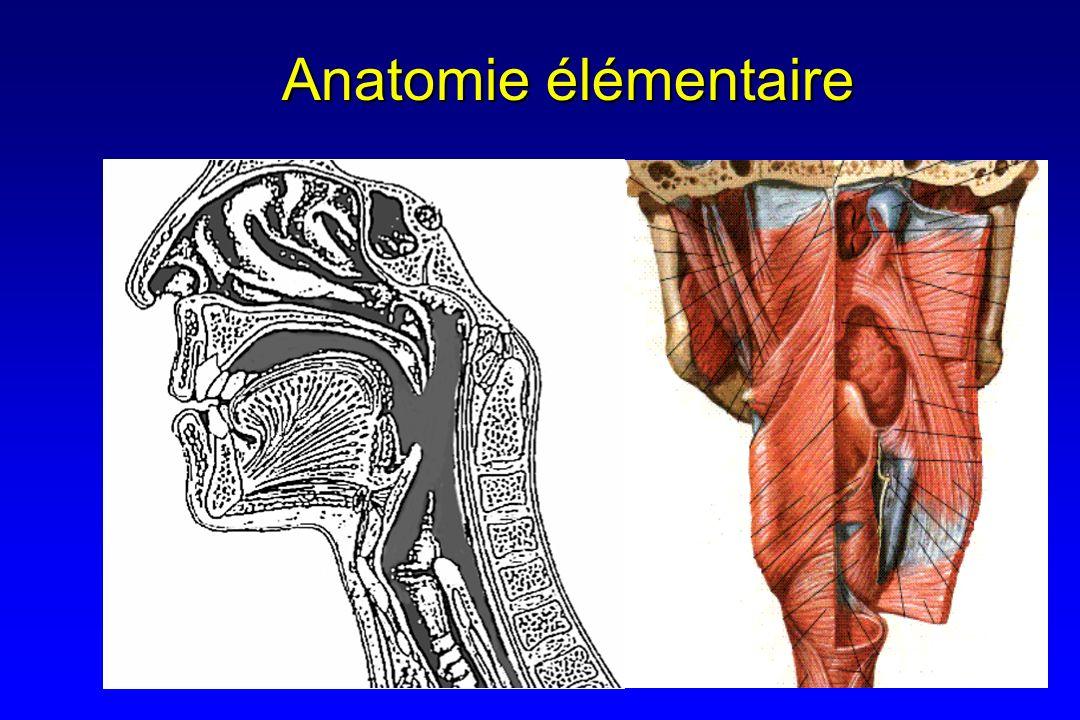 Anatomie élémentaire