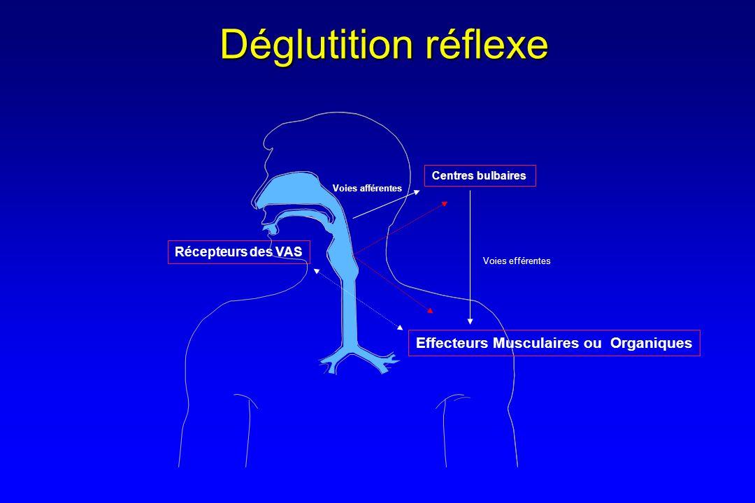 Effecteurs Musculaires ou Organiques