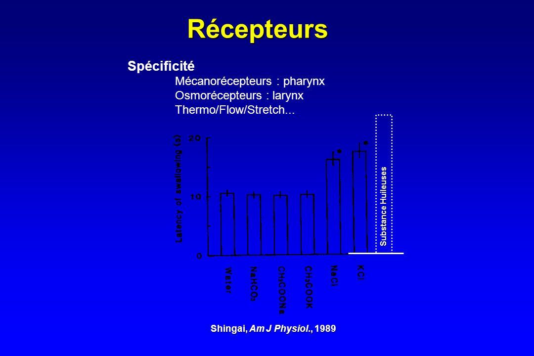 Récepteurs Spécificité Mécanorécepteurs : pharynx