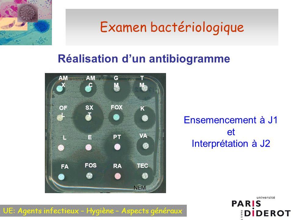 Examen bactériologique