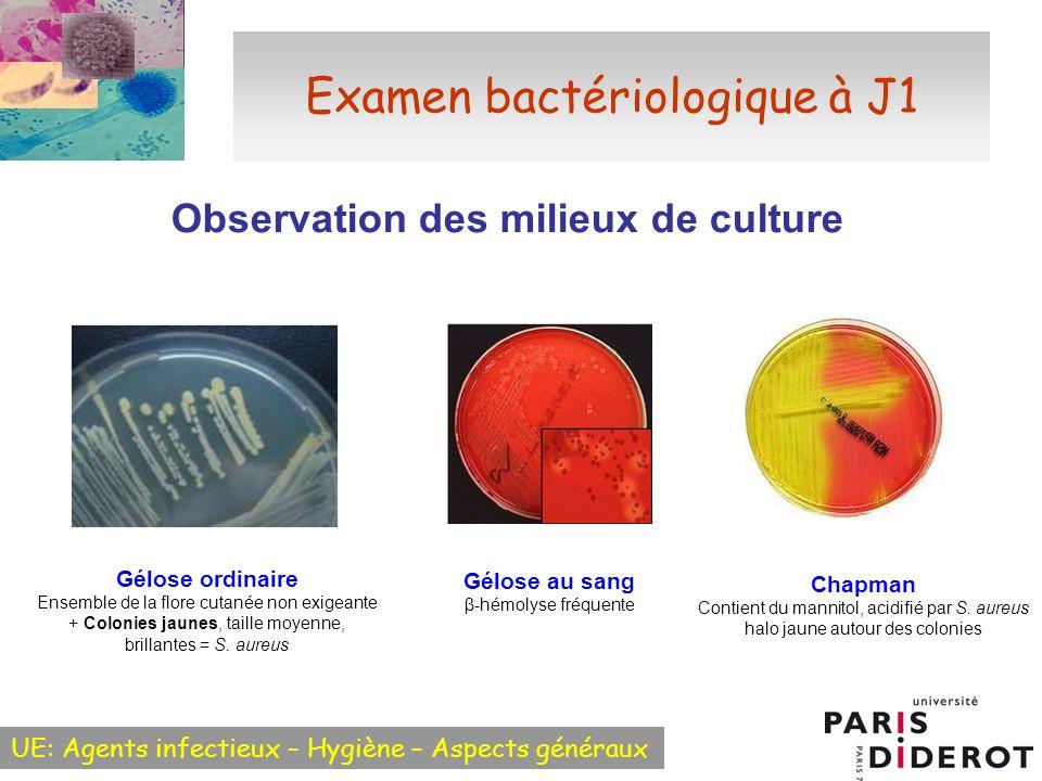 Examen bactériologique à J1