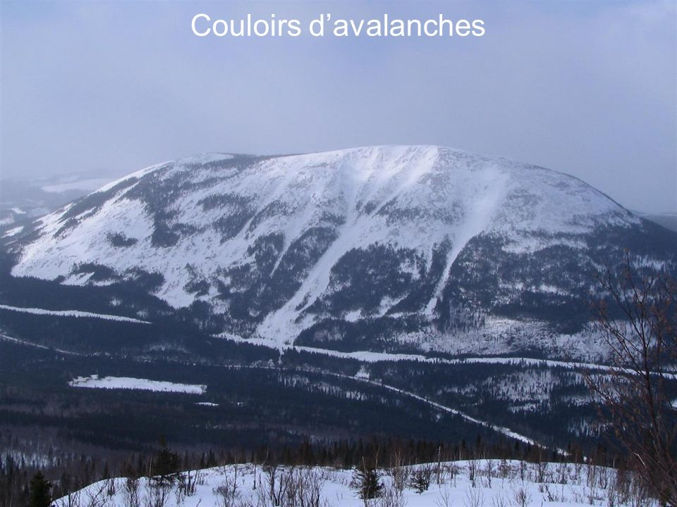 Couloirs d'avalanches