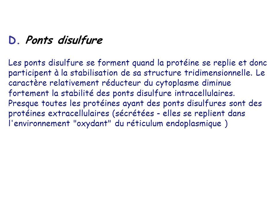 D. Ponts disulfure