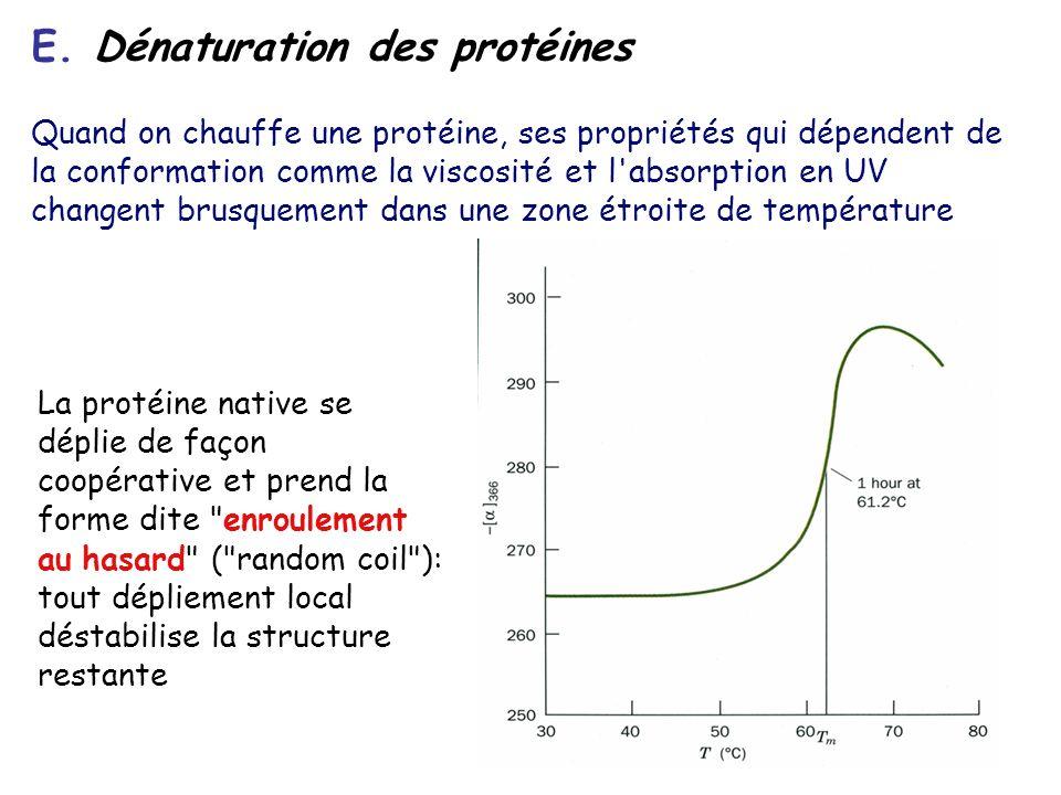 E. Dénaturation des protéines