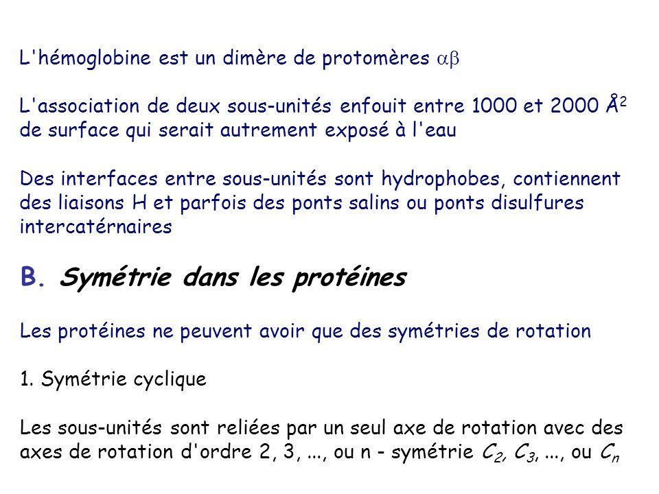 B. Symétrie dans les protéines