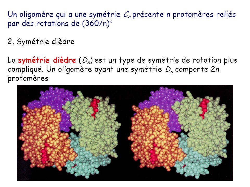 Un oligomère qui a une symétrie Cn présente n protomères reliés par des rotations de (360/n)°