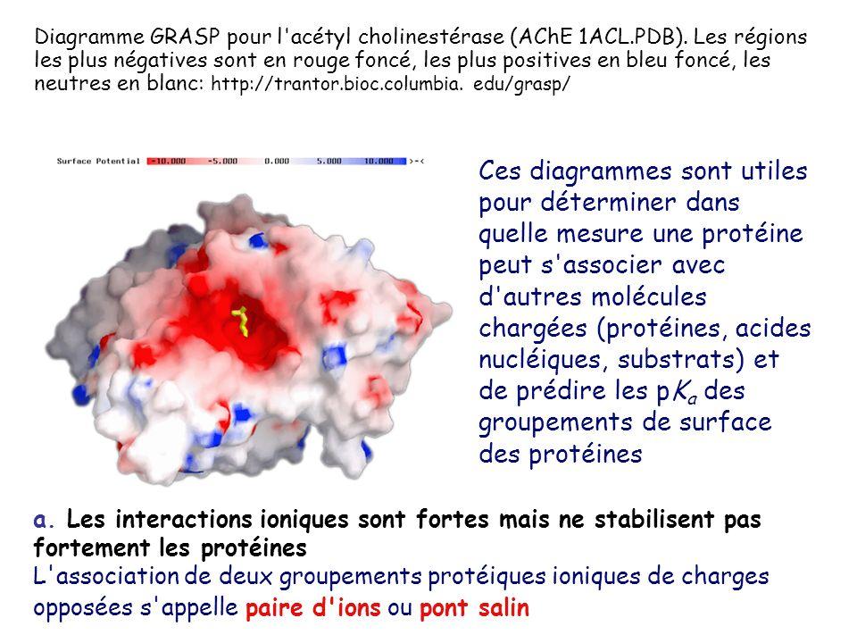 Diagramme GRASP pour l acétyl cholinestérase (AChE 1ACL. PDB)
