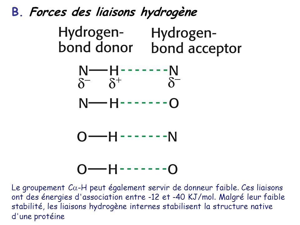 B. Forces des liaisons hydrogène