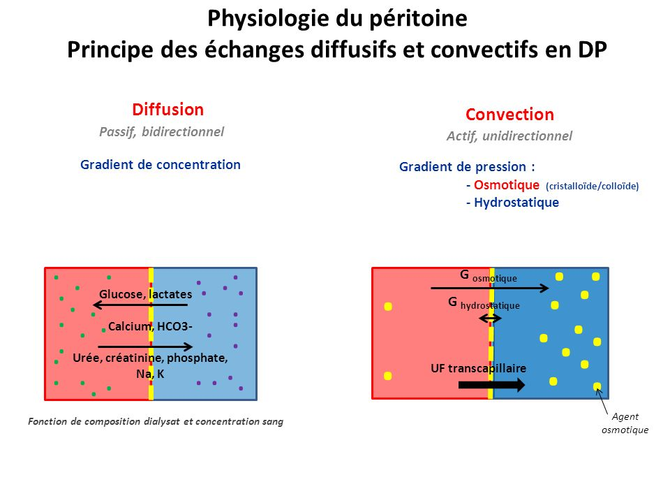 Physiologie du péritoine
