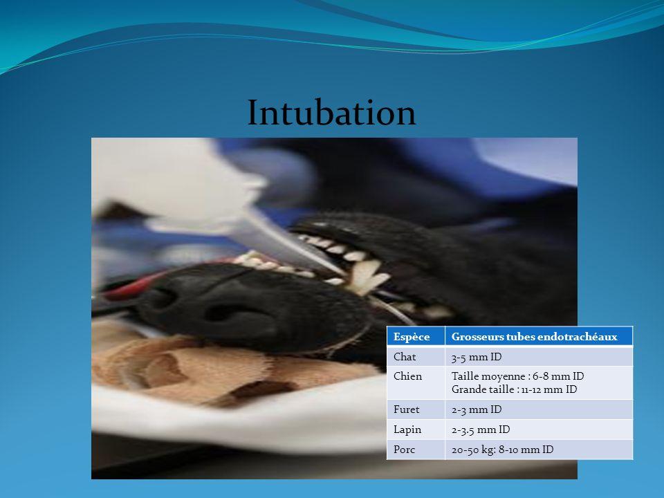 Intubation Espèce Grosseurs tubes endotrachéaux Chat 3-5 mm ID Chien