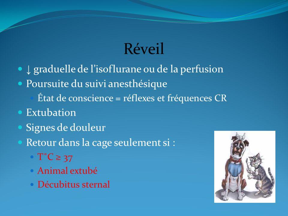 Réveil ↓ graduelle de l'isoflurane ou de la perfusion