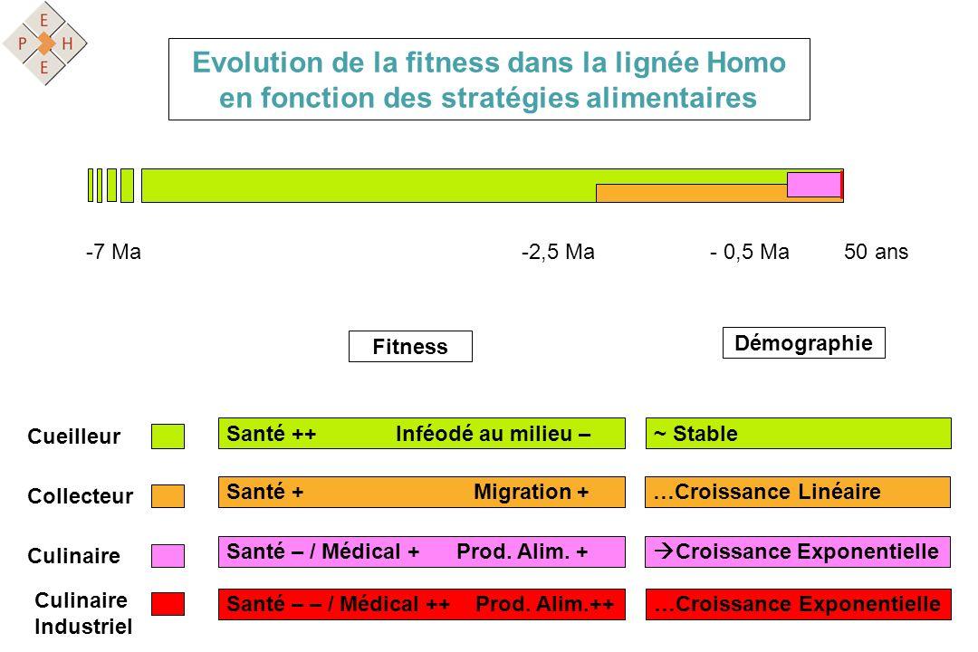 Evolution de la fitness dans la lignée Homo en fonction des stratégies alimentaires