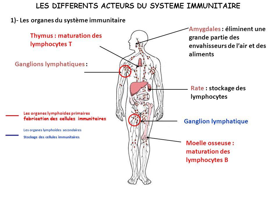 LES DIFFERENTS ACTEURS DU SYSTEME IMMUNITAIRE