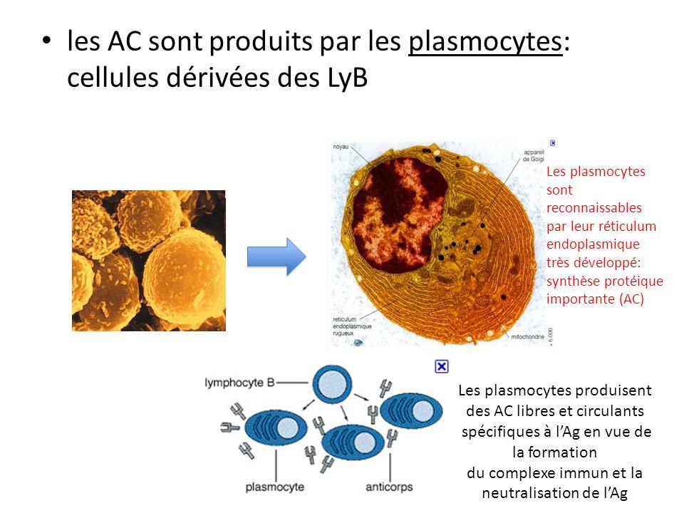 les AC sont produits par les plasmocytes: cellules dérivées des LyB