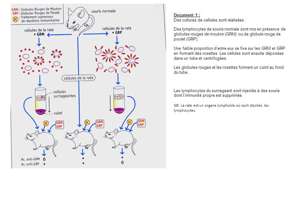 Document 1 : Des cultures de cellules sont réalisées.