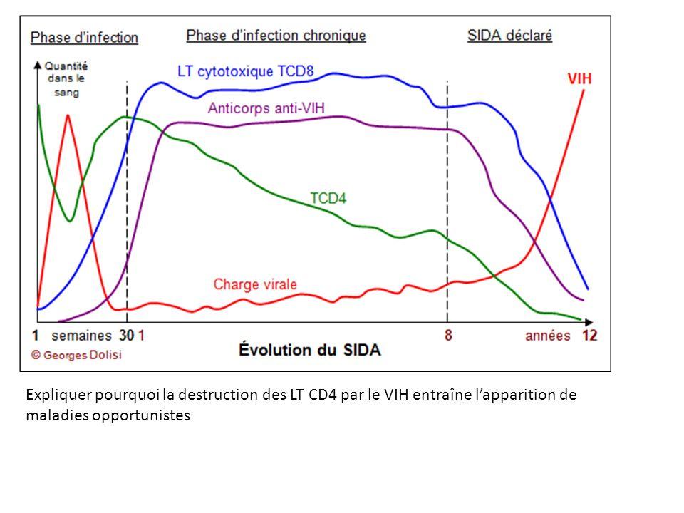 Expliquer pourquoi la destruction des LT CD4 par le VIH entraîne l'apparition de maladies opportunistes