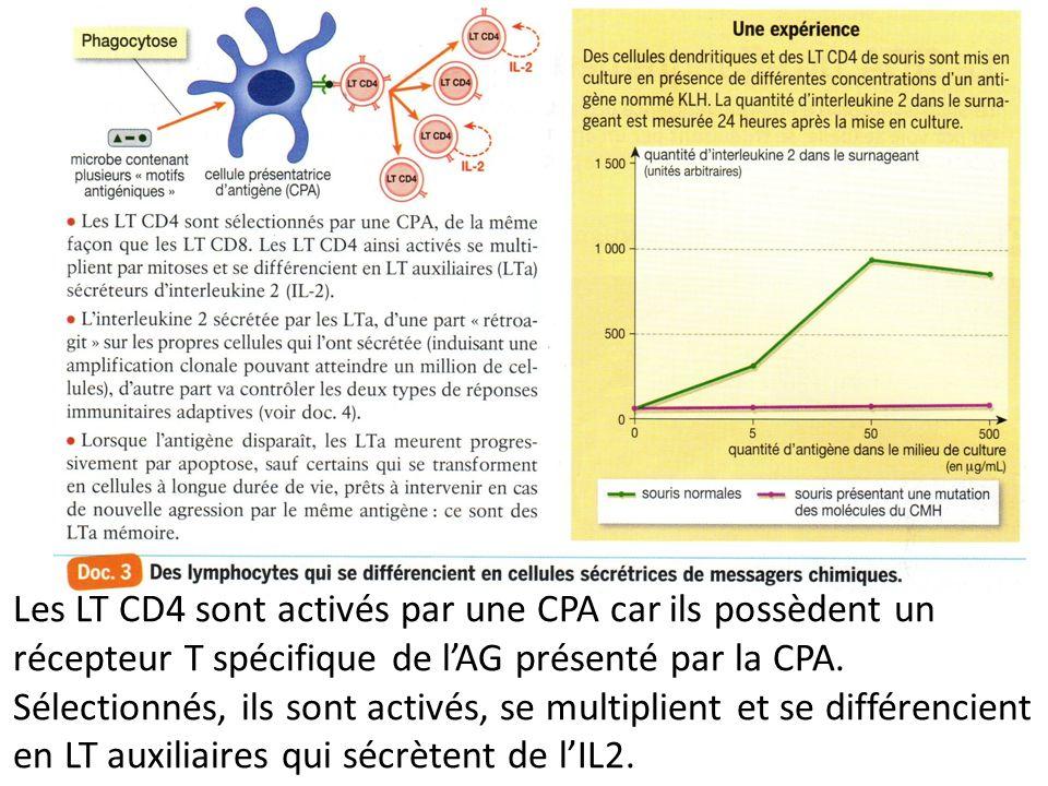 Les LT CD4 sont activés par une CPA car ils possèdent un récepteur T spécifique de l'AG présenté par la CPA.