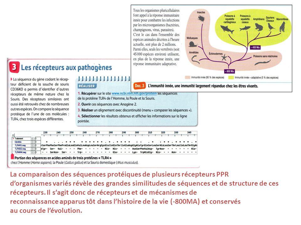 La comparaison des séquences protéiques de plusieurs récepteurs PPR