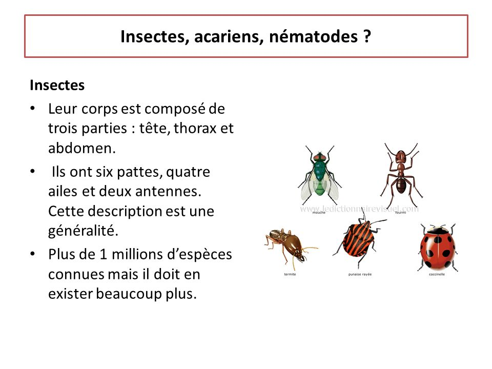 Insectes, acariens, nématodes
