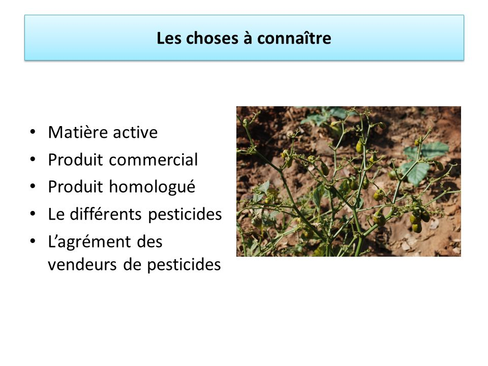 Les choses à connaître Matière active. Produit commercial. Produit homologué. Le différents pesticides.