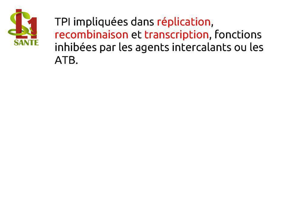 TPI impliquées dans réplication, recombinaison et transcription, fonctions inhibées par les agents intercalants ou les ATB.