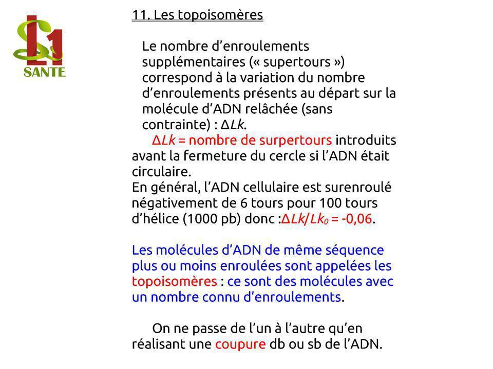 11. Les topoisomères