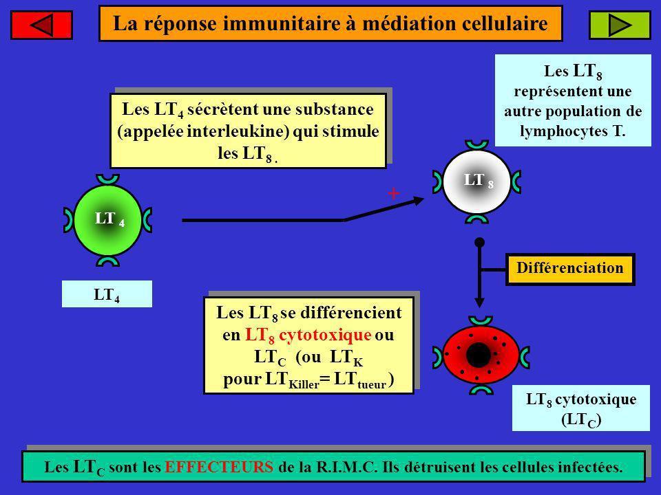 La réponse immunitaire à médiation cellulaire +