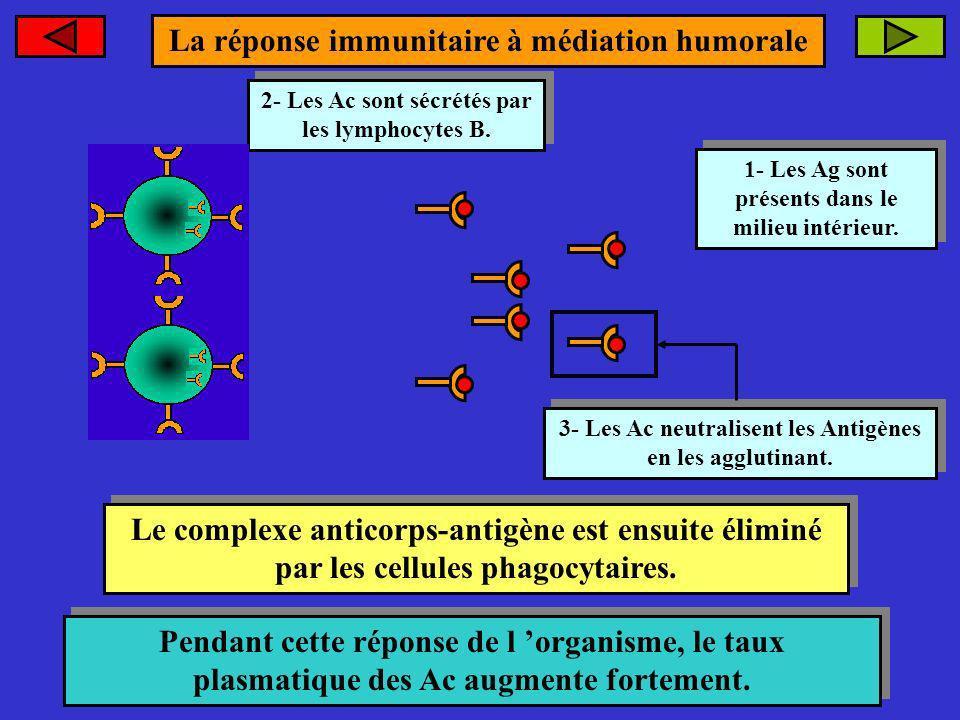 La réponse immunitaire à médiation humorale