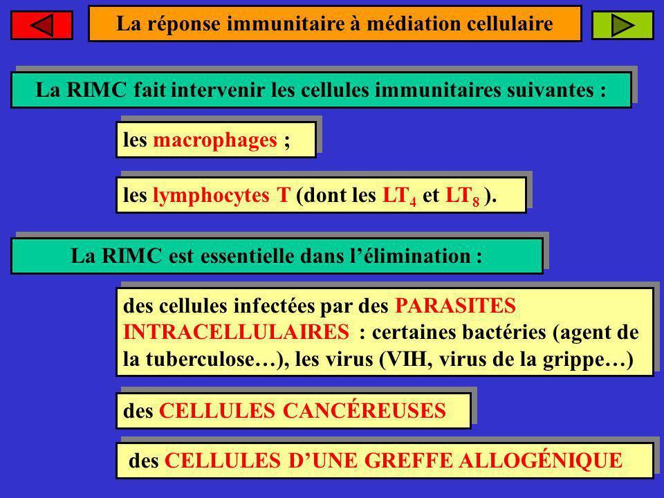 La réponse immunitaire à médiation cellulaire