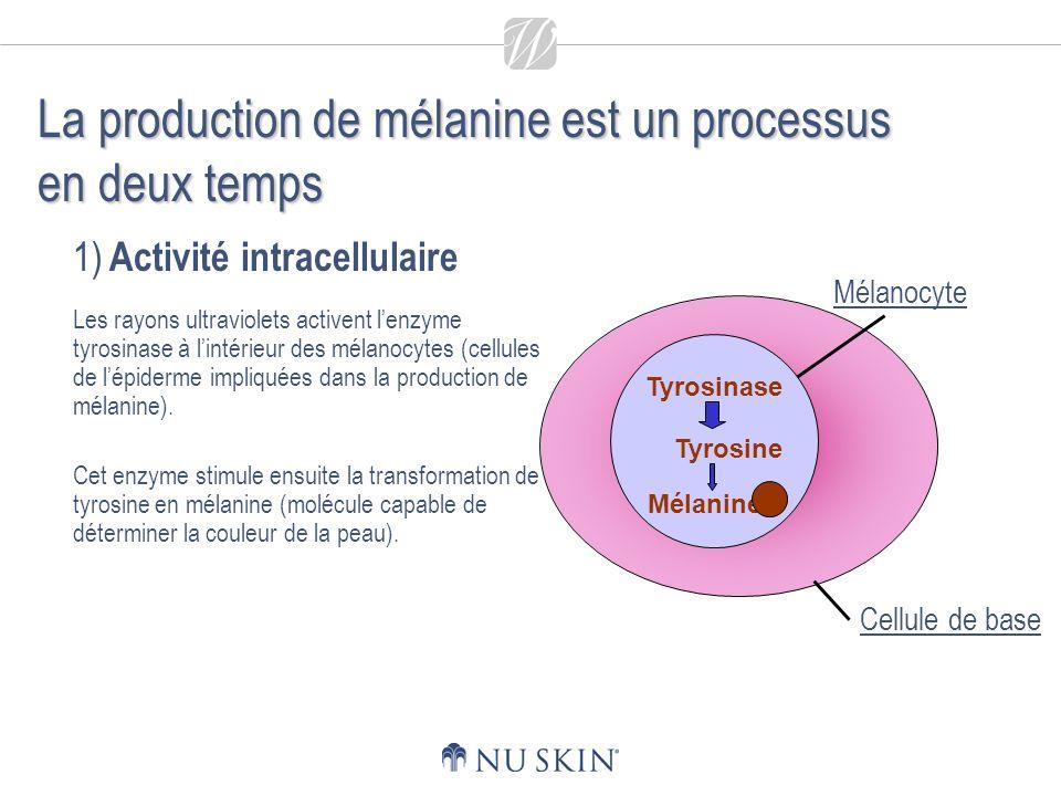 La production de mélanine est un processus en deux temps