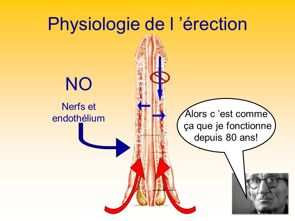 Physiologie de l 'érection