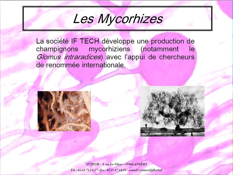 Les Mycorhizes