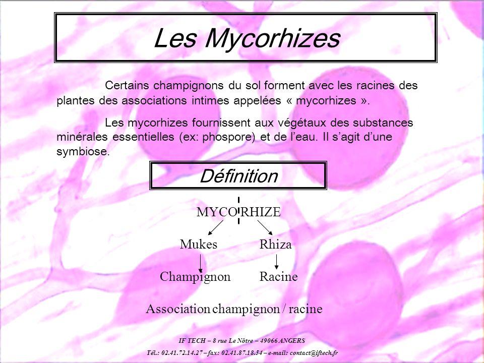 Les Mycorhizes Définition