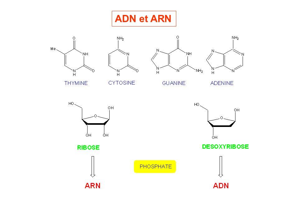 ADN et ARN