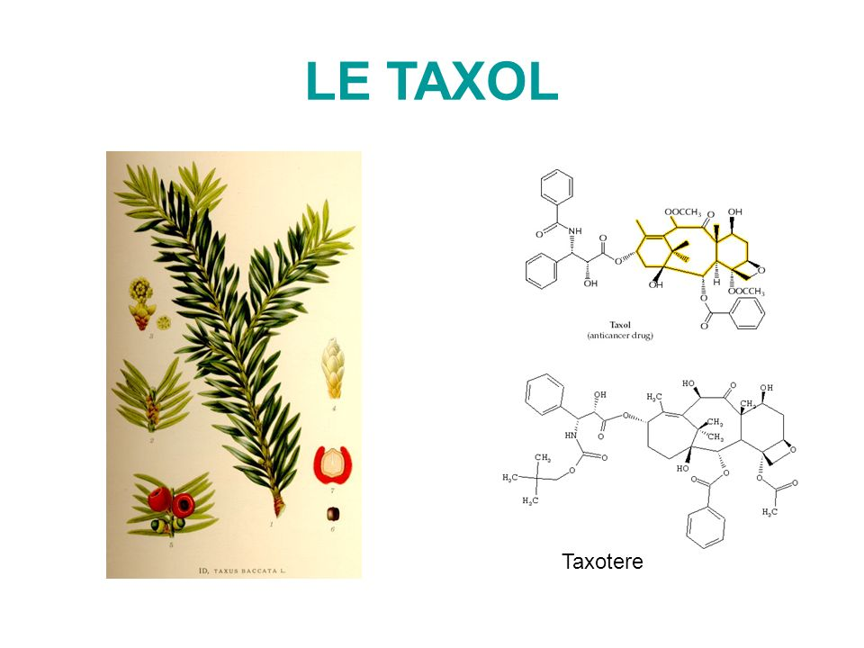LE TAXOL Taxotere