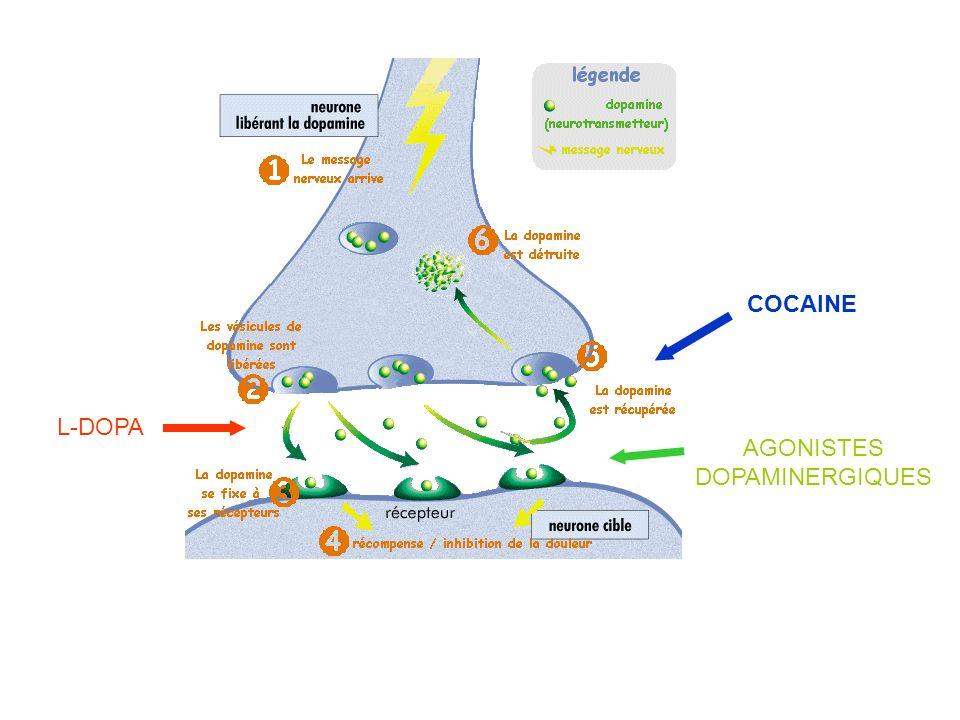 COCAINE L-DOPA AGONISTES DOPAMINERGIQUES