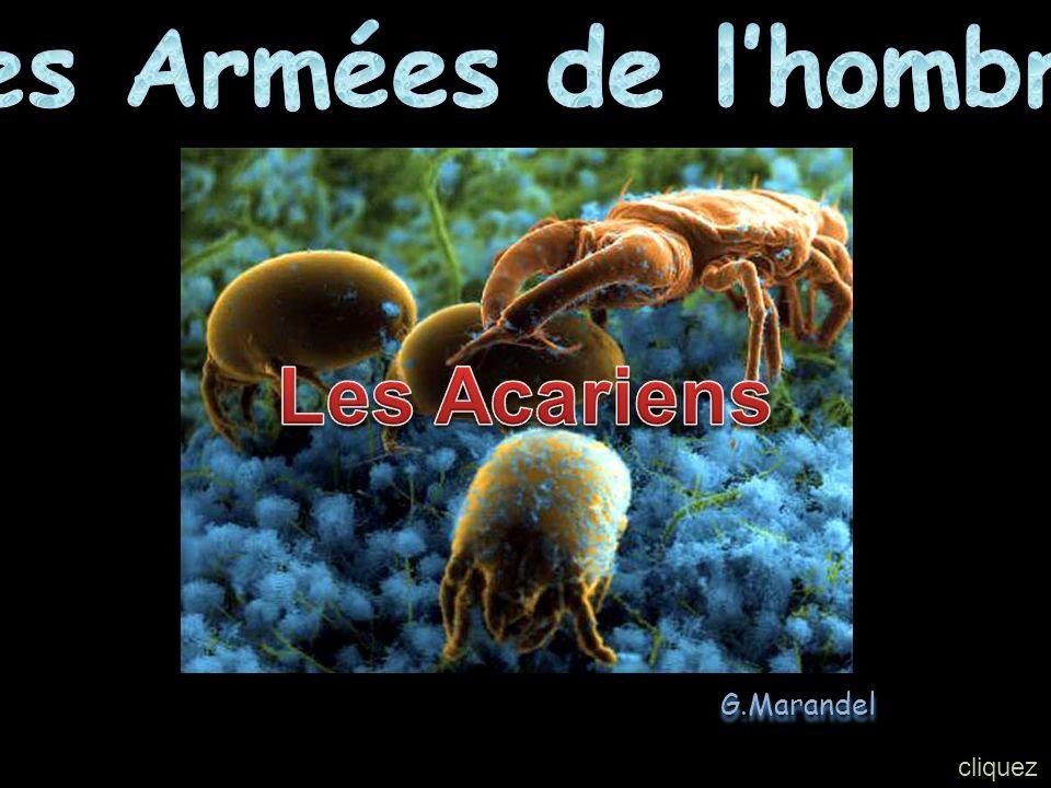 Les Armées de l'hombre Les Acariens G.Marandel cliquez