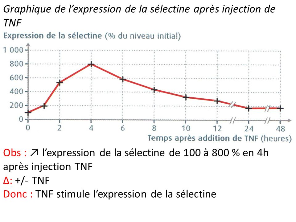 Graphique de l'expression de la sélectine après injection de TNF