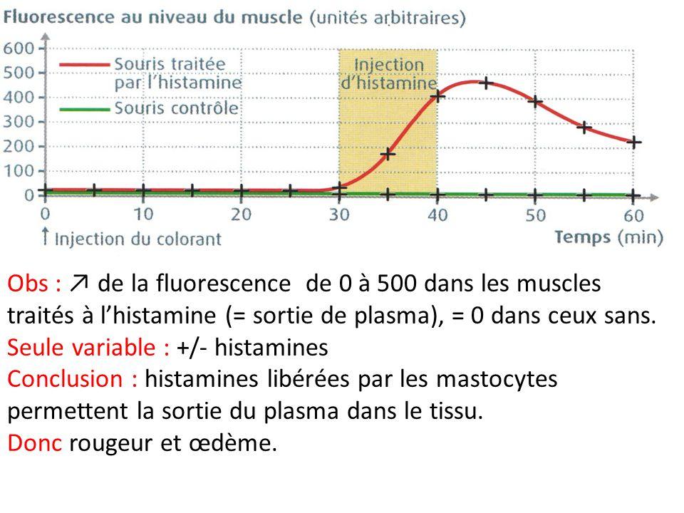 Obs : ↗ de la fluorescence de 0 à 500 dans les muscles traités à l'histamine (= sortie de plasma), = 0 dans ceux sans.